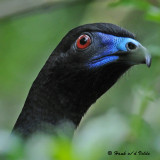 20090212 CR # 1 452 Black Guan.jpg