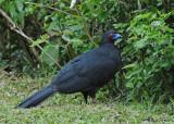 20090212 CR # 1 594 479 Black Guan.jpg