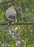 20090212 CR  1 720 White Hawk SERIES.jpg