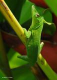 20090212 CR # 2 362 Lizard.jpg