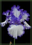 20090607 288 Iris.jpg