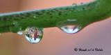 20090718 105 Water Drop Reflections - SERIES.jpg