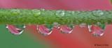 20090725 091 Water Drop Reflections - SERIES.jpg