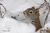 20100126 289 Squirrel.jpg