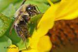20100820 147 Bumble Bee.jpg