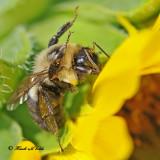 20100820 183 Bumble Bee.jpg