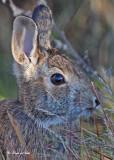 20101012 003 Rabbit.jpg