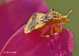 20120902 015 SERIES - Ambush Bug.jpg