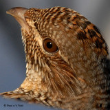 20080112 176 Ruffed Grouse SERIES.jpg