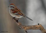 20071221 102 Am Tr Sparrow.jpg