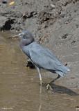 20080228 LB Heron - Mexico 3 054.jpg