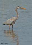 20080225 GB Heron - Mexico 2 262.jpg