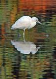 20080228 LB Heron (Imm)1 - Mexico 3 179.jpg