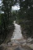 Lake Bush track..