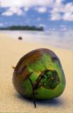 Desert Island Coconut