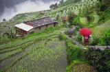 Trekking The Rice Path