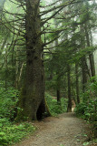 Olympic NP Rain Forests