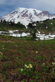 Paradise _ Rainier NP - July 2011