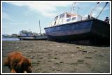 Stranded Fishing Boats & Napping Dog