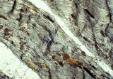 Schist Thin Section