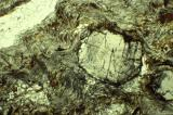Garnet Schist Thin Section