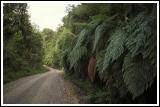 Giant ferns (?)