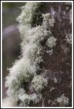 Patagonia: Moss