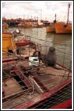Fishing Boat Visitor