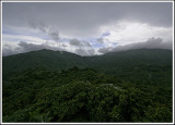 Rainforest View II