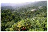 Rainforest View I