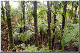 High Rainforest