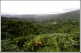 Rainforest View III