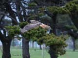 Birds - Various