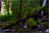 A Stream Near Lake Quinault