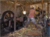 Grinding the Sugarcane