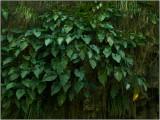 Lush Greenery at Annandale Falls