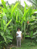 Donna under the Heliconia