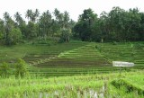 53 Hectares for Sale