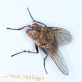 ph_2382 Fly.jpg