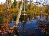 New Beaver Pond