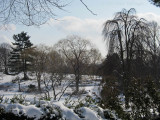 Winter Trees at Willow Pond, Mount Auburn Cemetery