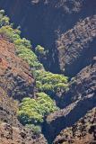 Waimea Canyon Streambed