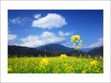 DSC_0104m.jpg