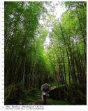 Mist . Bamboo . Chitou   ·ËÀYÀH¼v