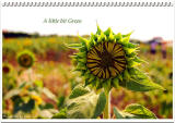 ¦V¶§¹A³õ  Sunflower's Talk
