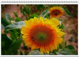 DSC_0049m.jpg