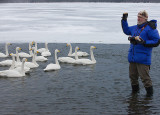 Whooper Swans with Joe Van Os