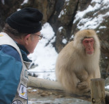Snow Monkey and photographer