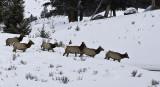 1.Elks,female escape