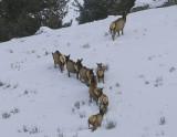 3.Elks,female escape over the hill